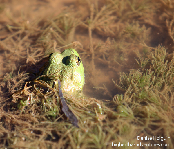 Frog & Mushroom